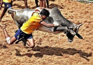 Young Indians Saving Jallikattu